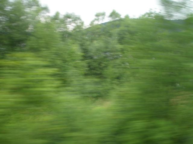 20110711-093959.jpg