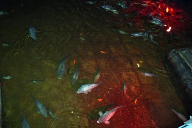 25.10.12 Istanbul-32 Basilica Cistern fish